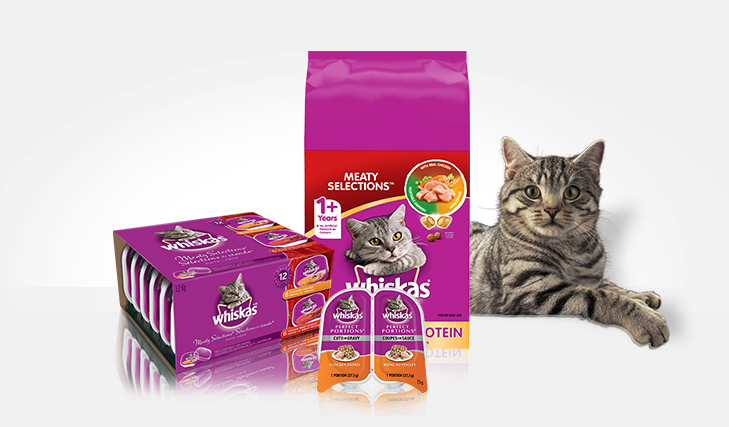 Cat Food For Kittens And Adults