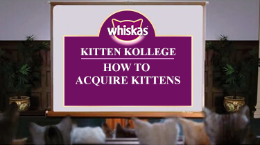 How to Acquire Kittens