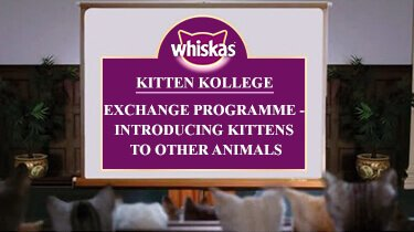 Exchange Programme - Introducing Kittens to Other Animals